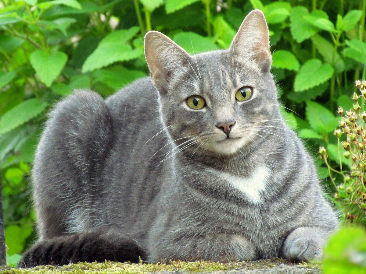 про кошек с картинками можно встретить