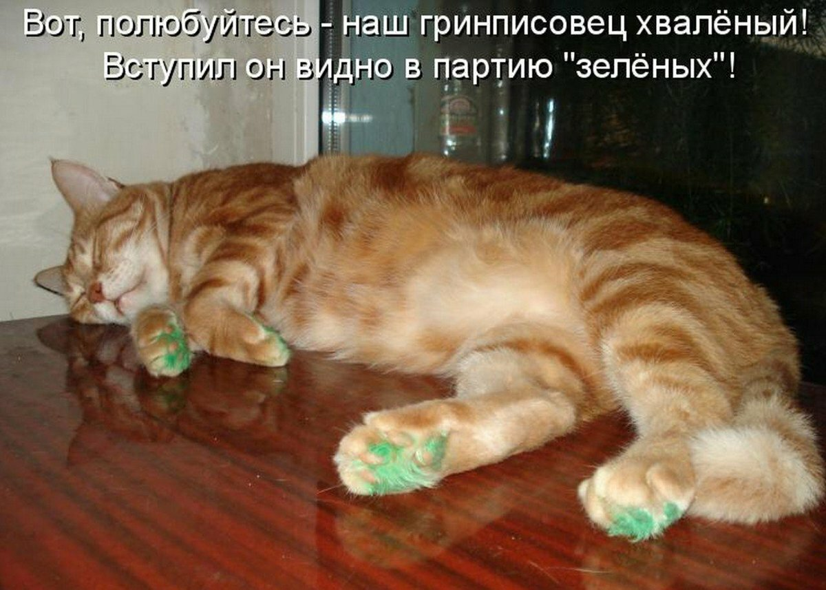 Смешные картинки с надписями котов и кошек