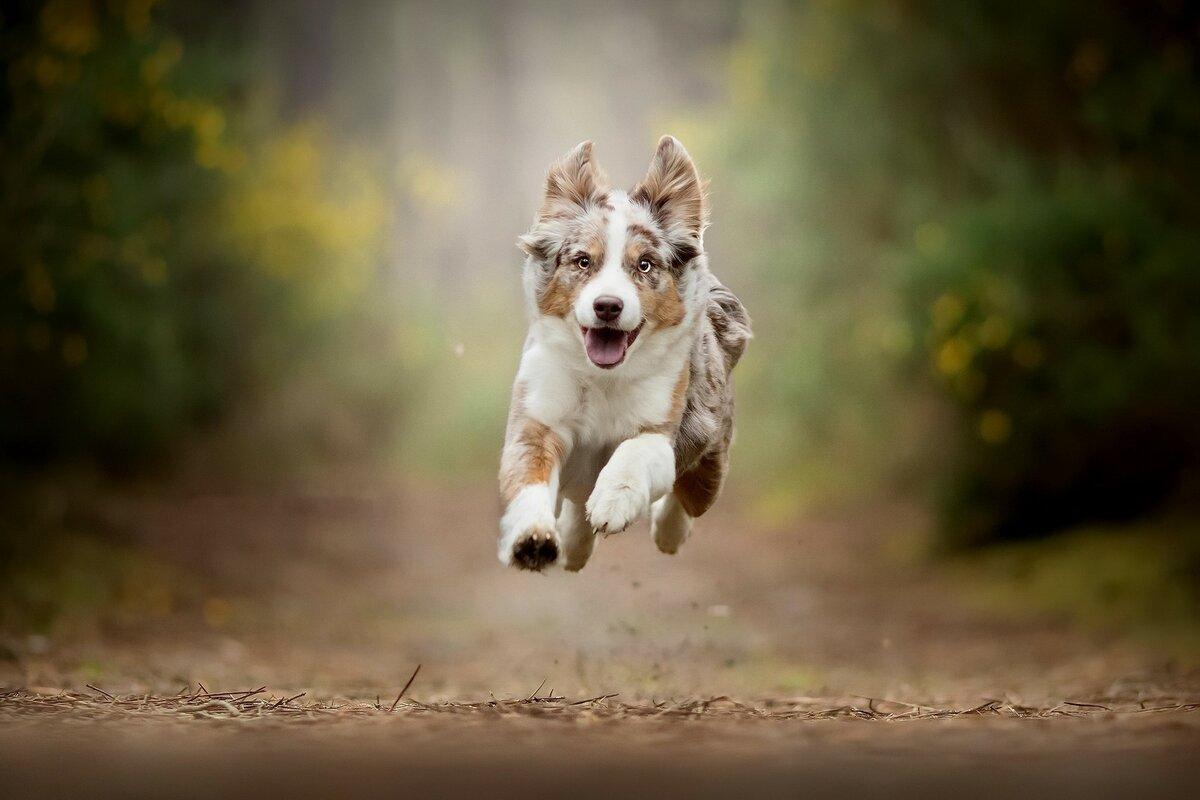 можно картинки собака бежит миди