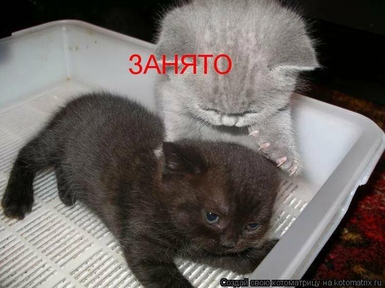 Смешные картинки с котиками и надписями смешными