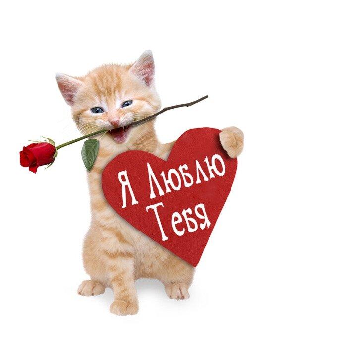 Люблю тебя картинки с надписями с котятами