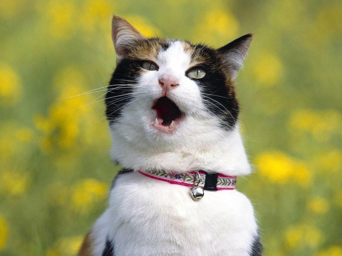 Открытка, смешные картинки с кошками смотреть