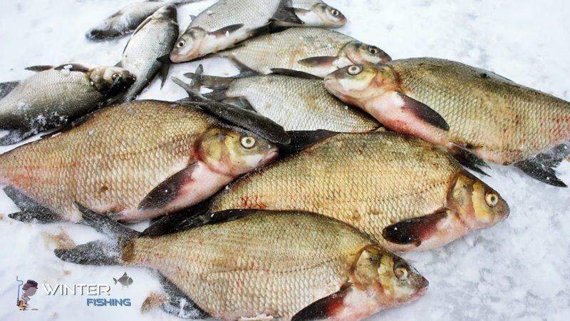 Десногорское водохранилище Зимняя рыбалка в Шмаково