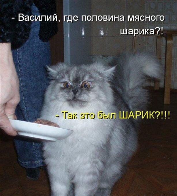 Котики картинки прикольные с надписями