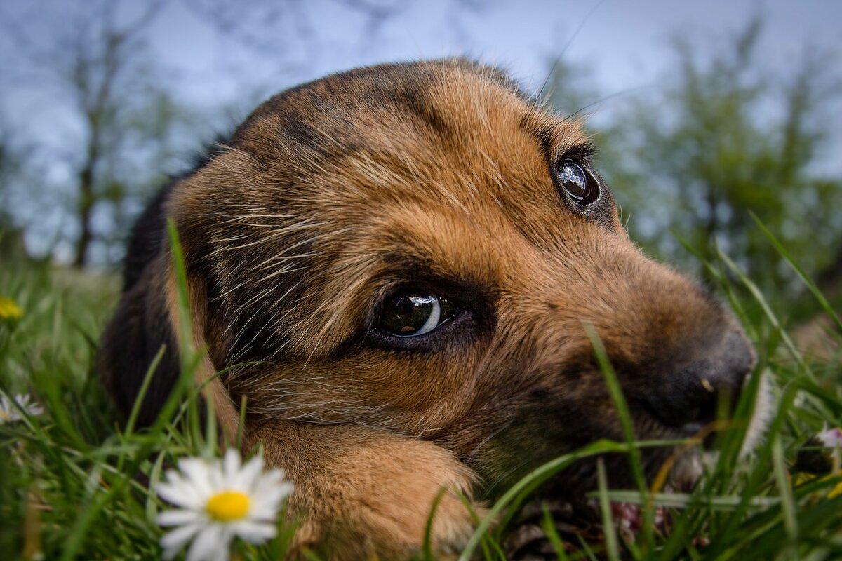 Картинка грустный пес
