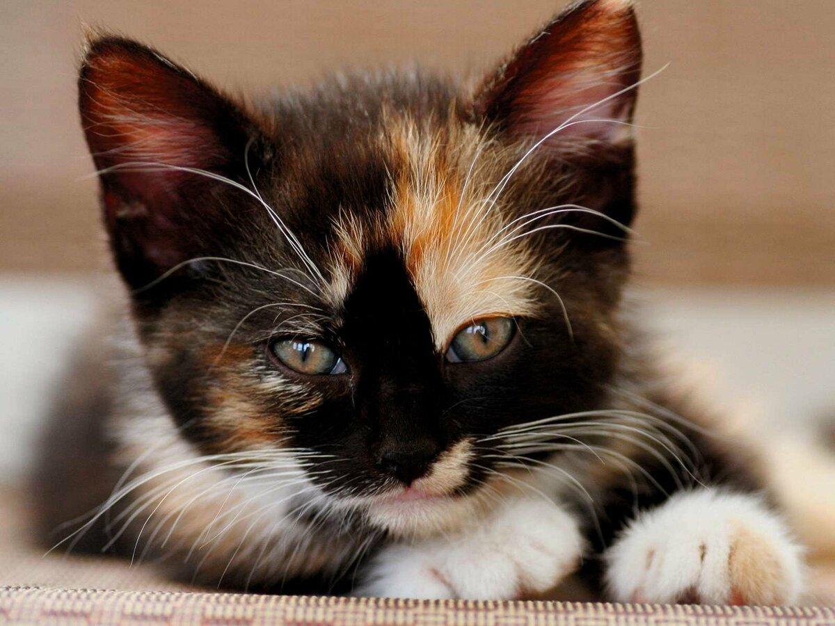 удивительные картинки котят подбираем