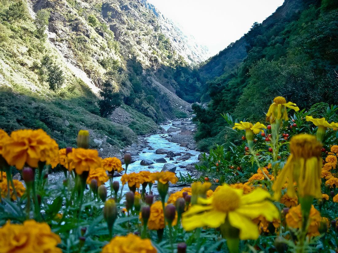 массе основном долина цветов уникальный уголок индии фото выключателях схема