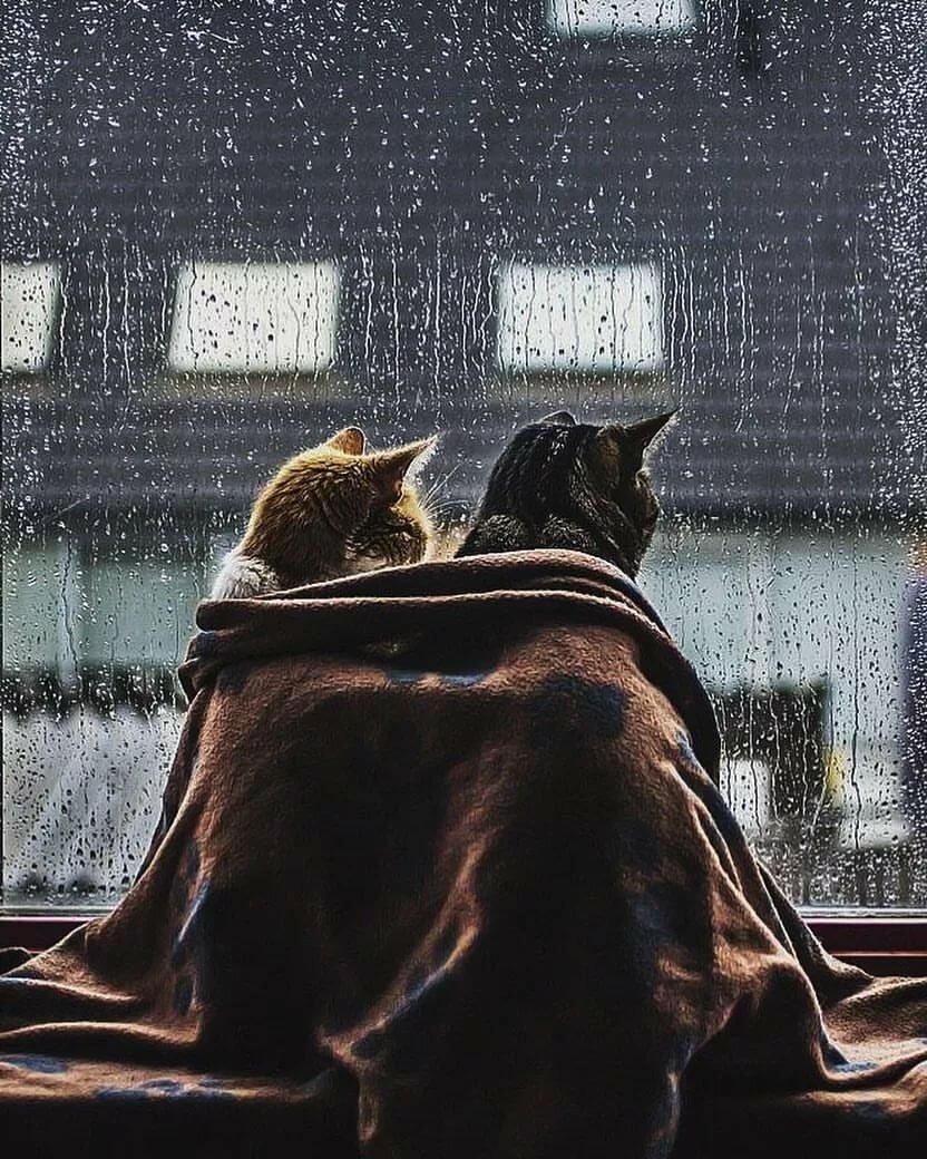 Картинка дождь за окном с надписями