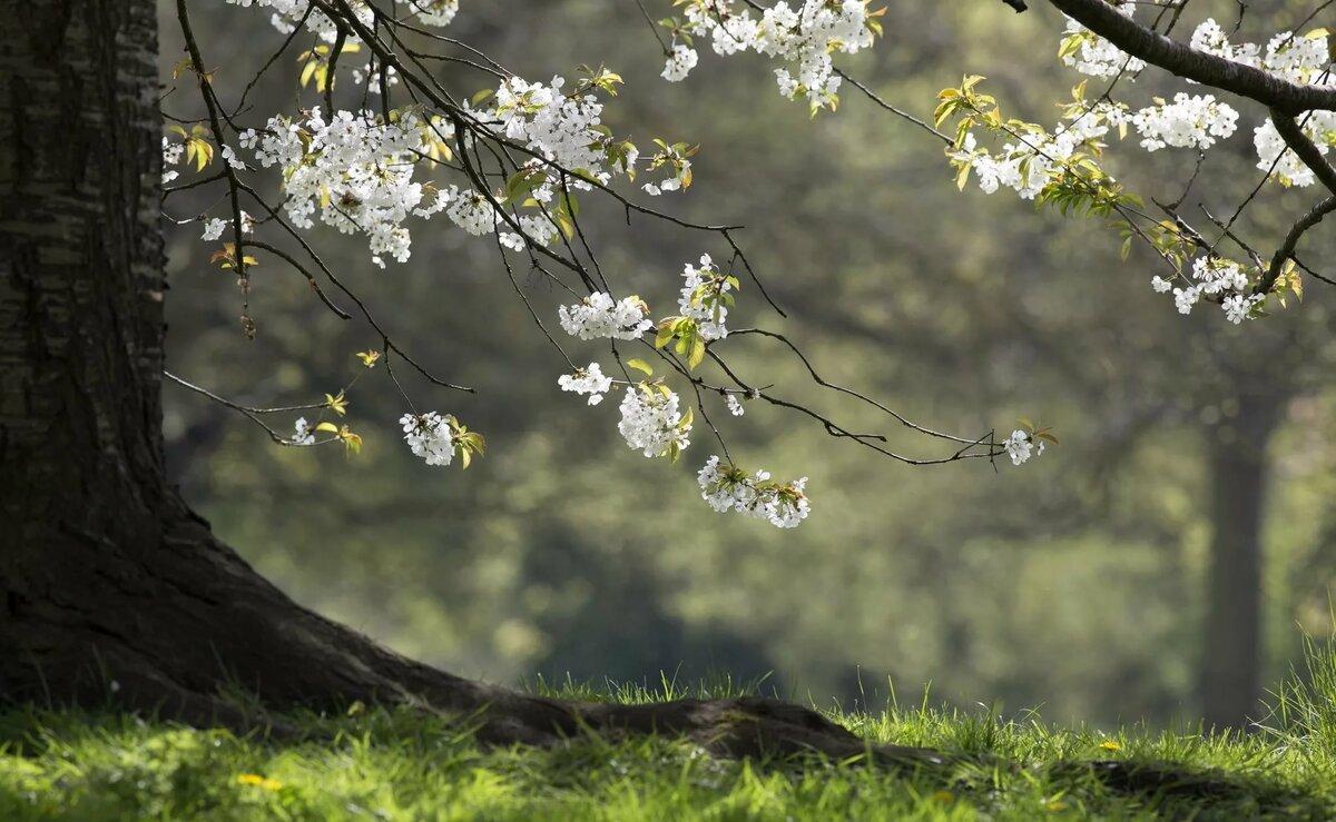 Рабочий стол обои весна картинки