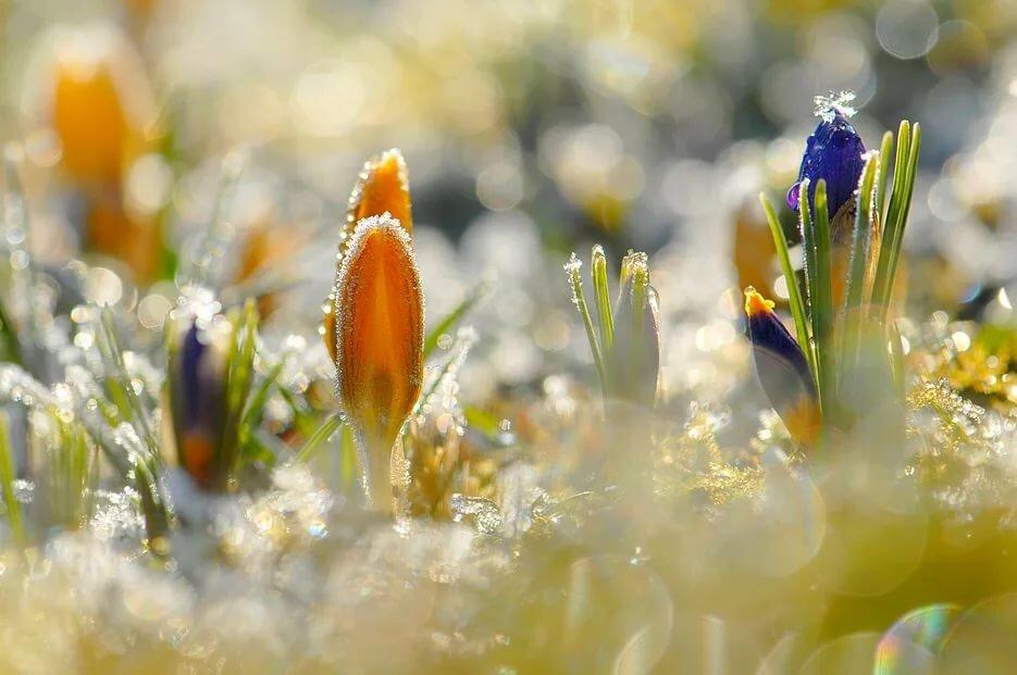картинки солнечные весна макро разные зависимости