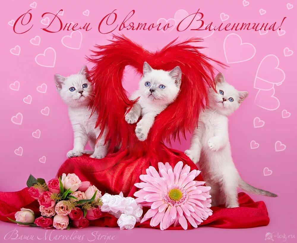 зависимости открытки ко дню святого валентина фото для теста