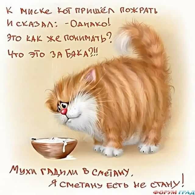 Поздравления днем, с днем котов картинки с надписями