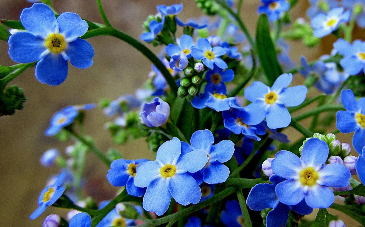 Сдавайся картинки, картинки на рабочий стол полевые цветы самые красивые