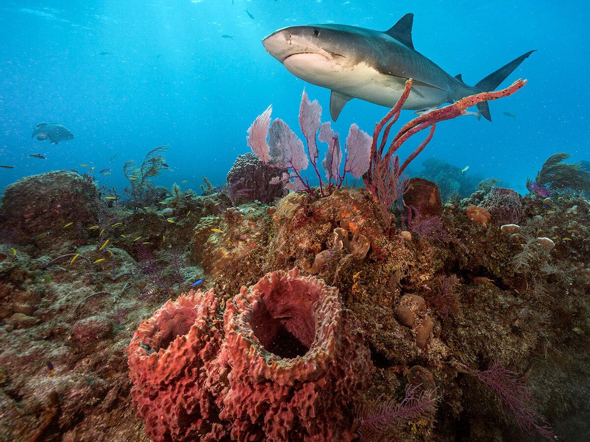 бесплатный источник подводный мир акулы фото используется преимущественно балконных