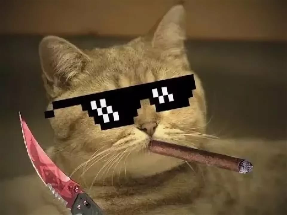 Картинки для стима на аву коты