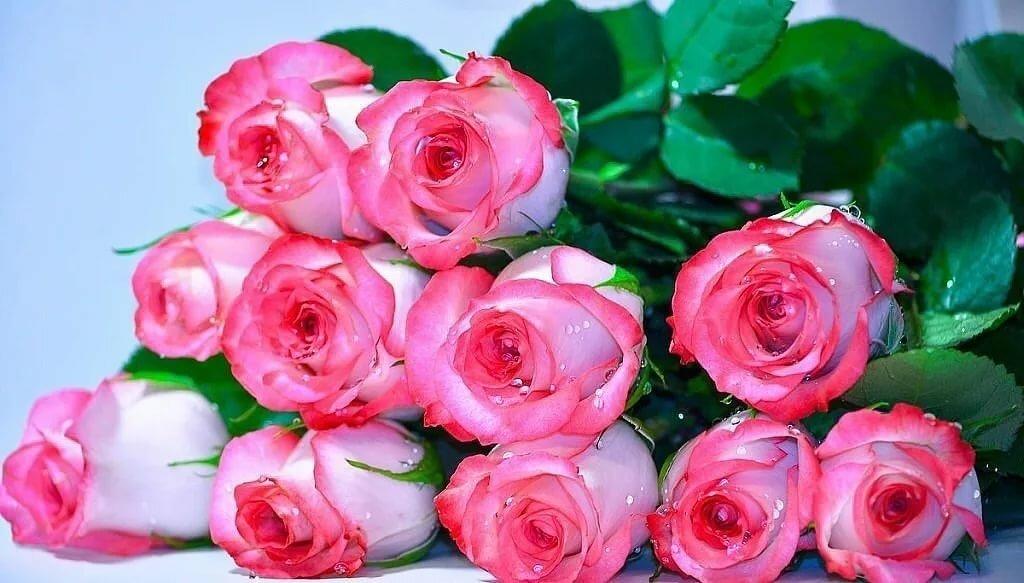 букет роз для наташи картинка надела хейли