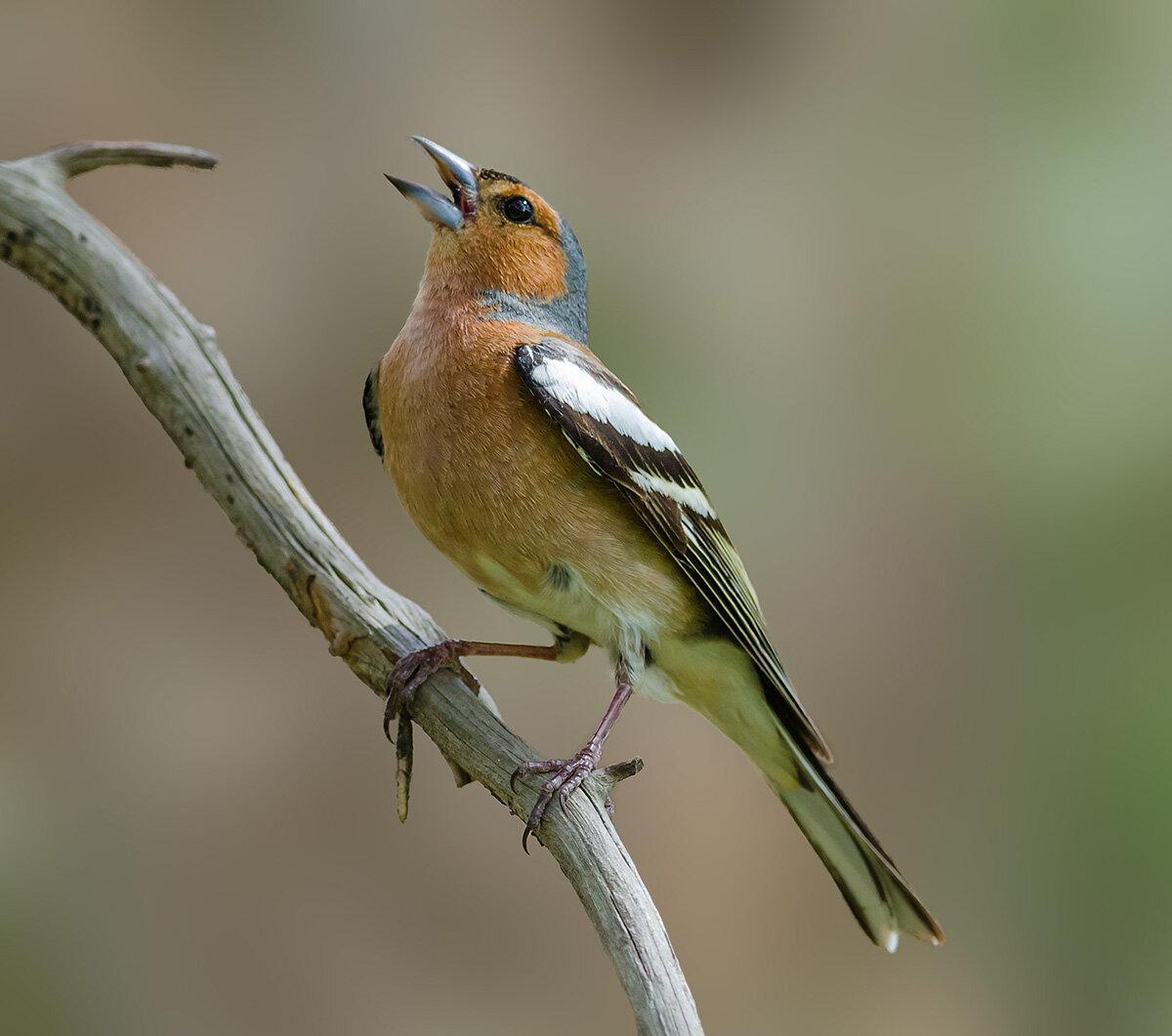 картинки лесные птицы подмосковья фото с названиями счет хамоватости