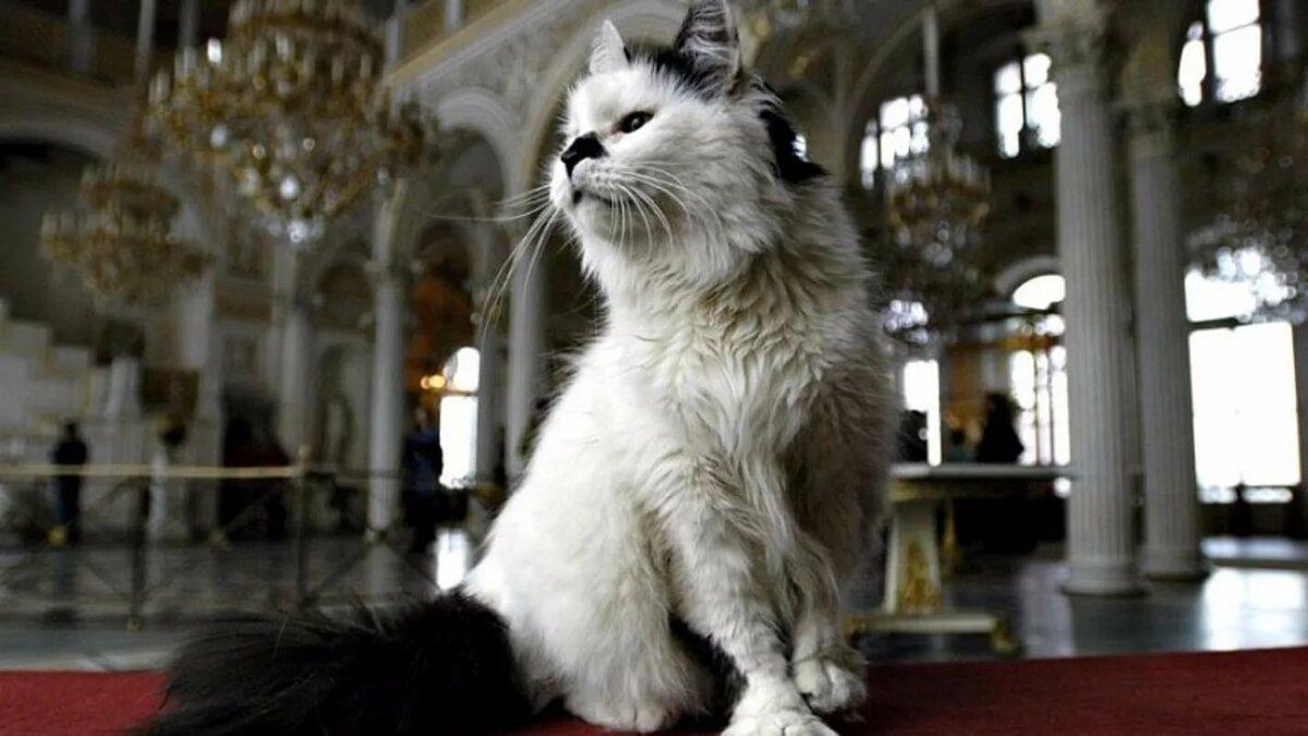 День кошек 2020: какого числа отмечают в России