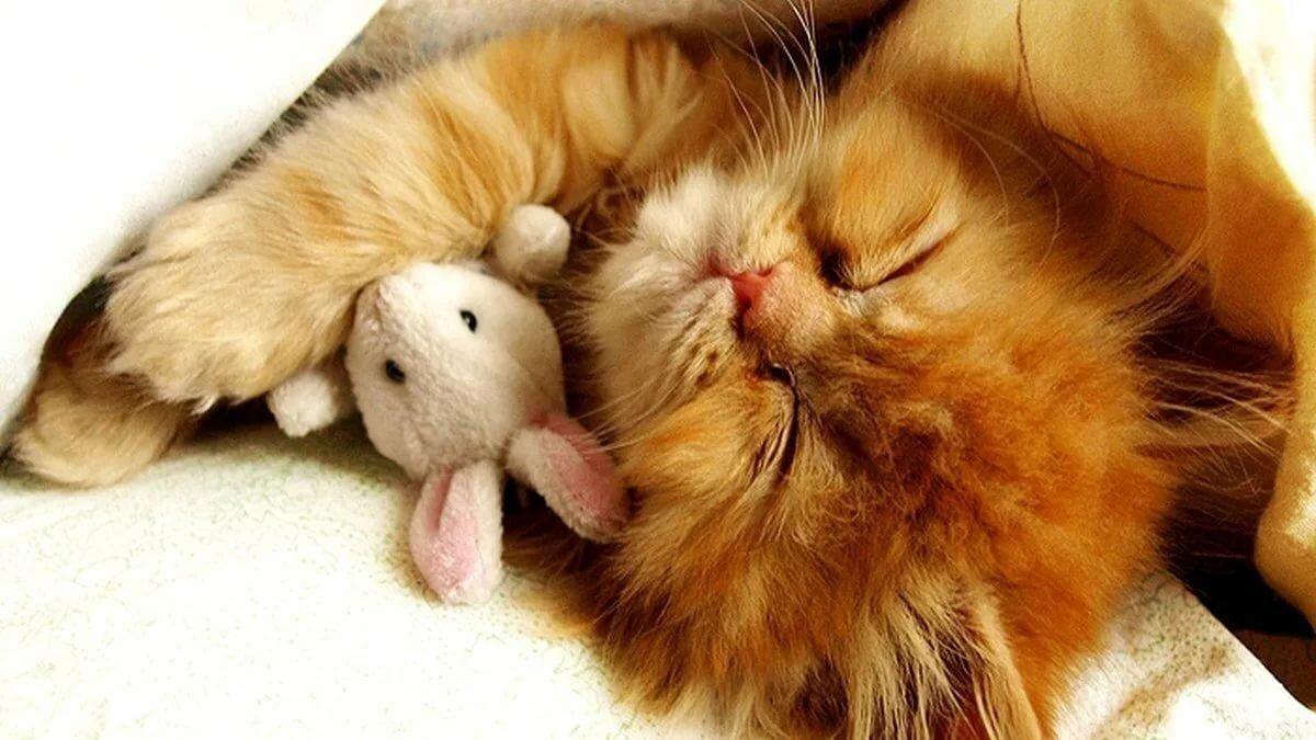 Сладких снов любимая картинки с рыжими котами