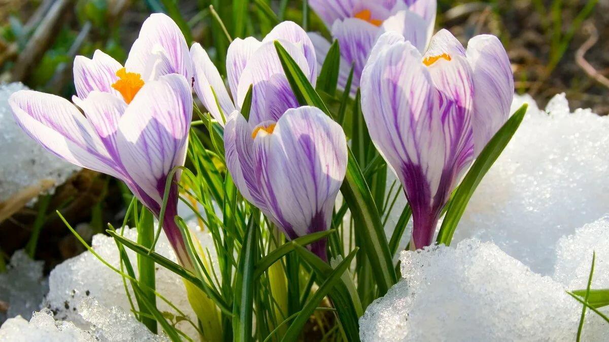 Картинки про весну на рабочий стол красивые, доброе утро мой