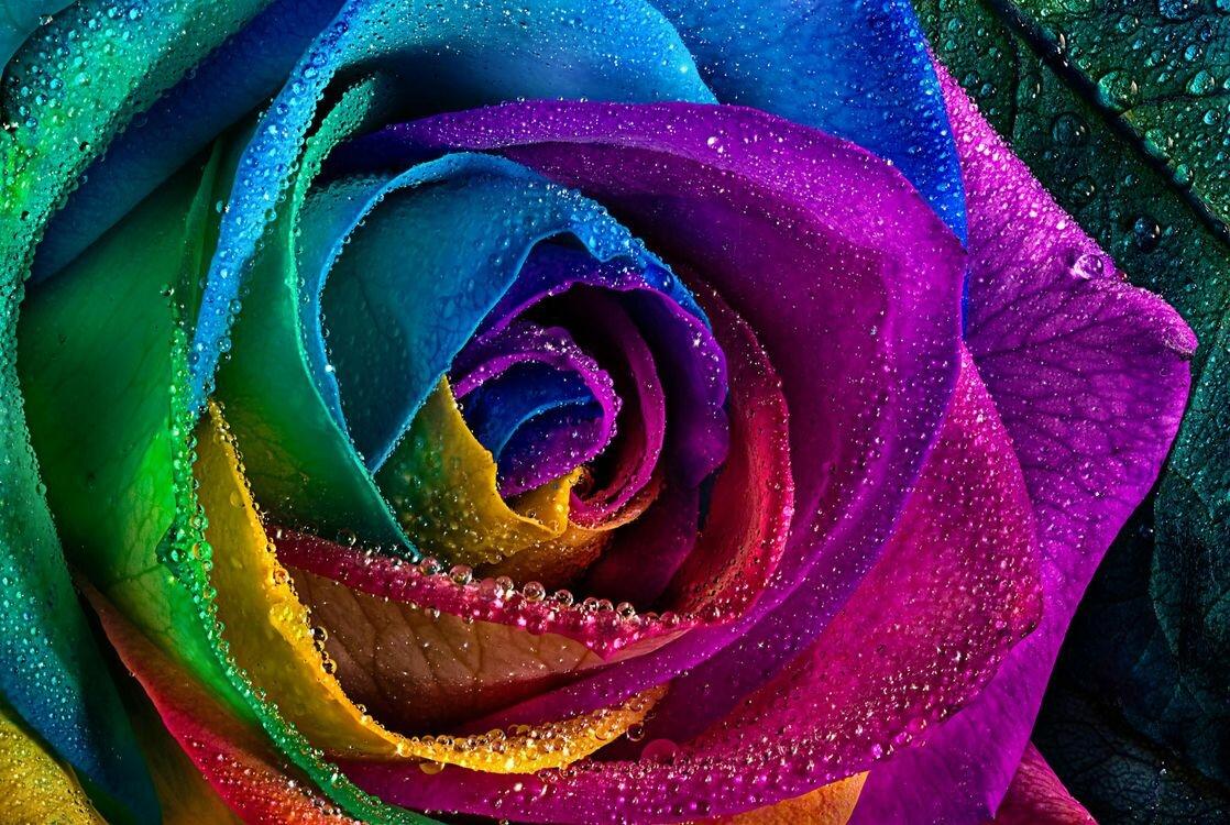 картинки розы разноцветные с блеском моде болотный цвет