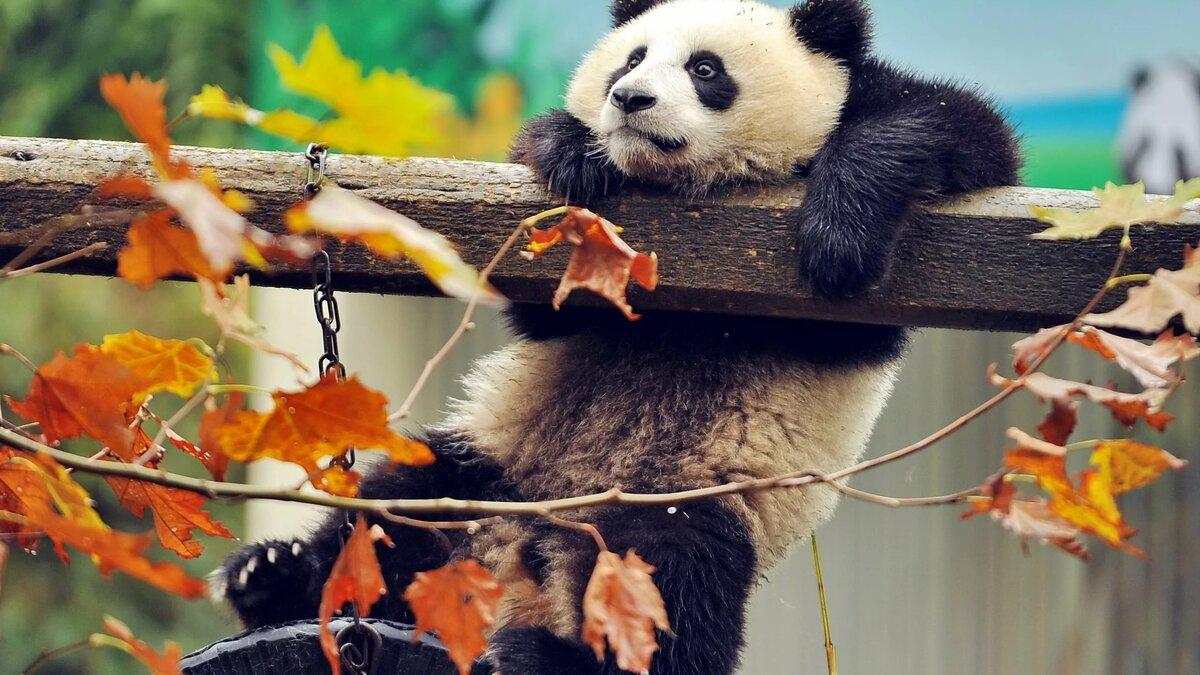 Красивое картинки с животными, открытки