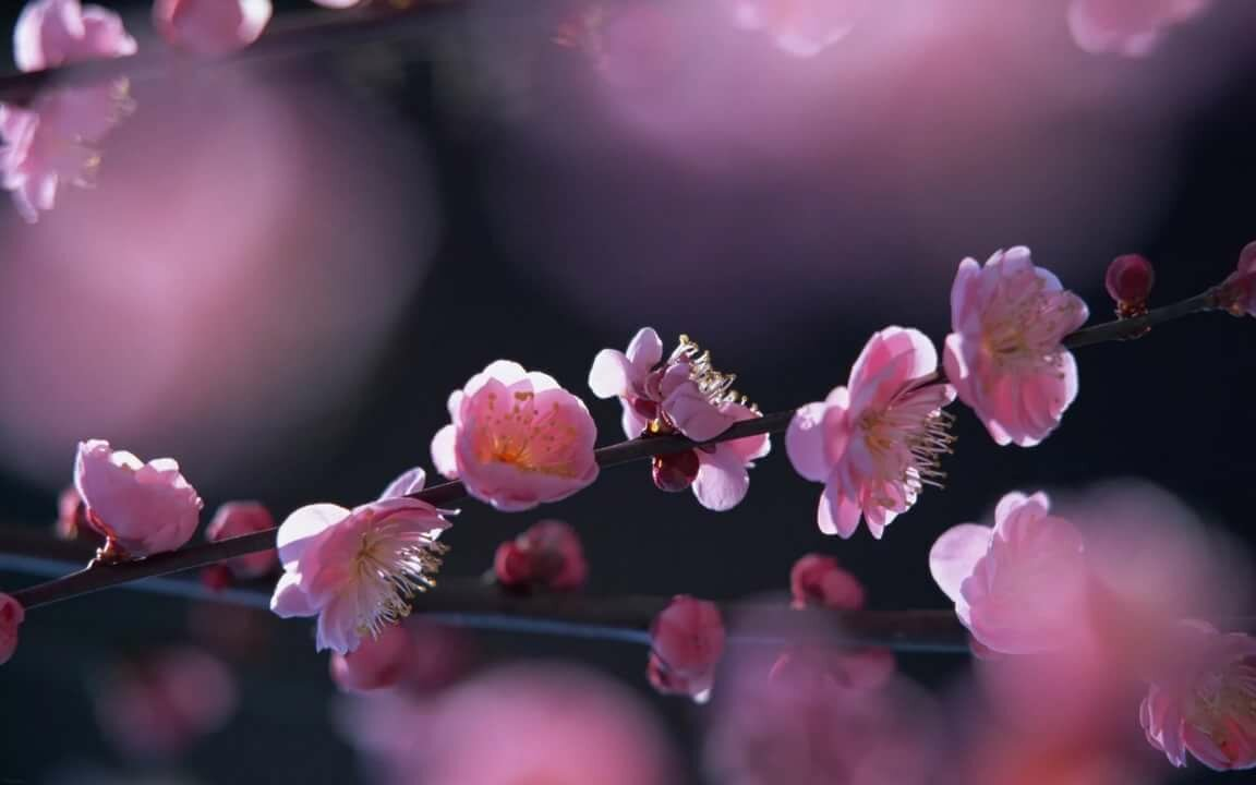 Картинки на телефон цветы, ночи открытки