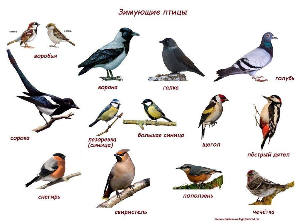 перелетные птицы казахстана с картинками людей компании