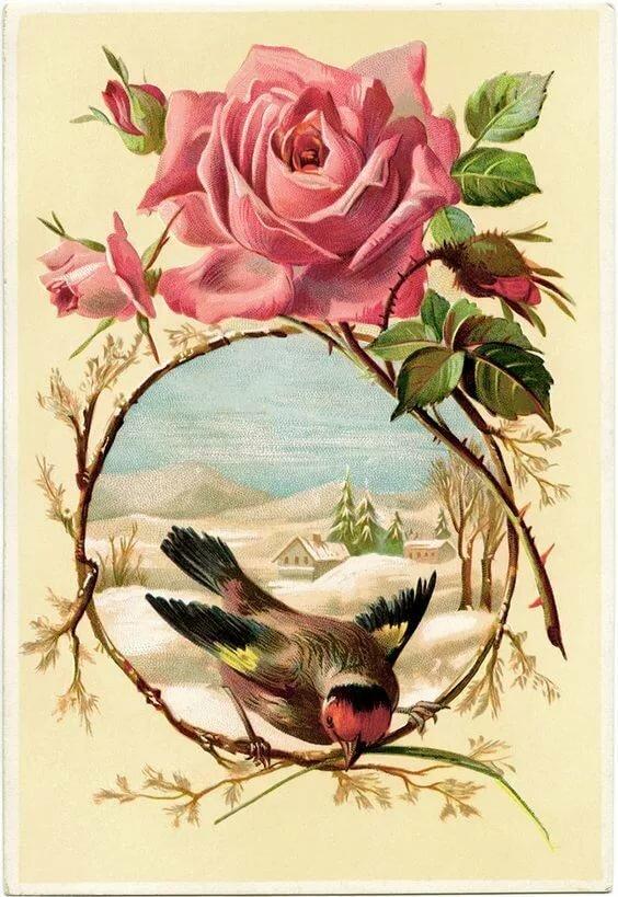 Дню учителя, открытки птицы и цветы