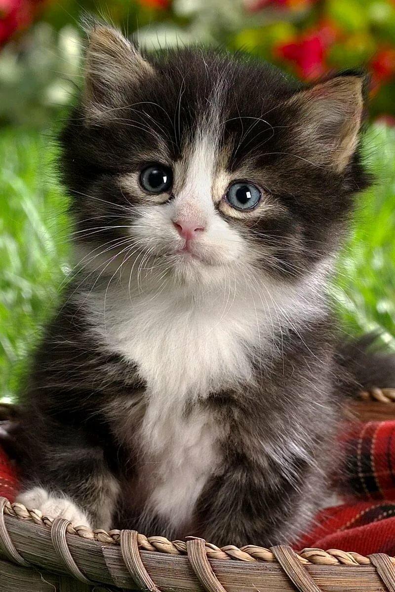 Живые картинки кошки и котята, подснежниками