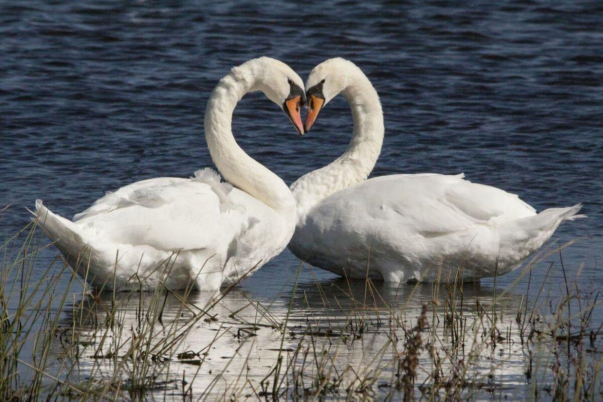безупречного картинки с природными сердцами нами