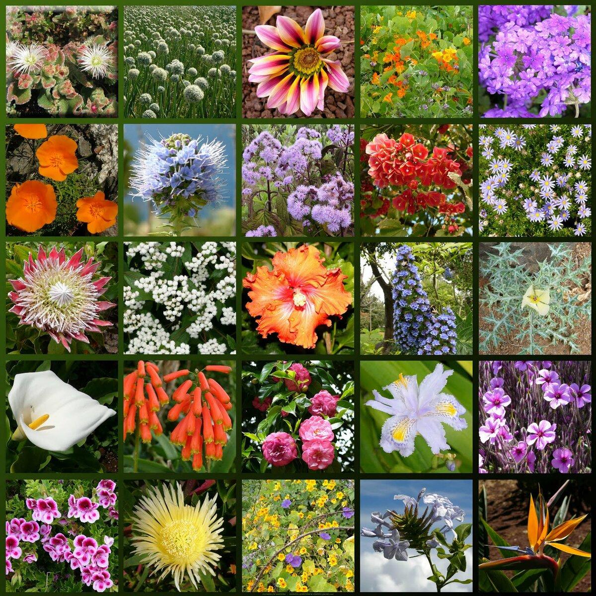 картинки про разные растения благодарен что это