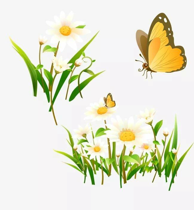 Векторные картинки цветы и бабочки, днем рождения