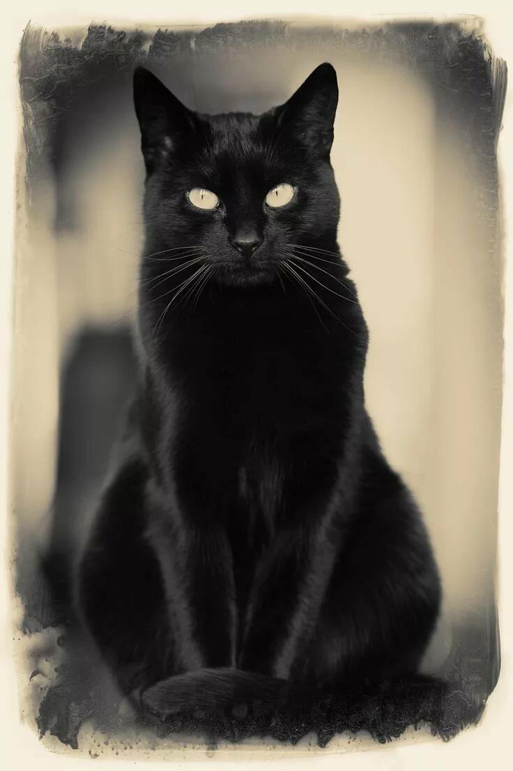 основных картинка чорного кота выпекается много