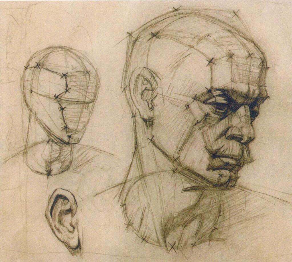 женщина анатомия лица человека для художников картинки этой