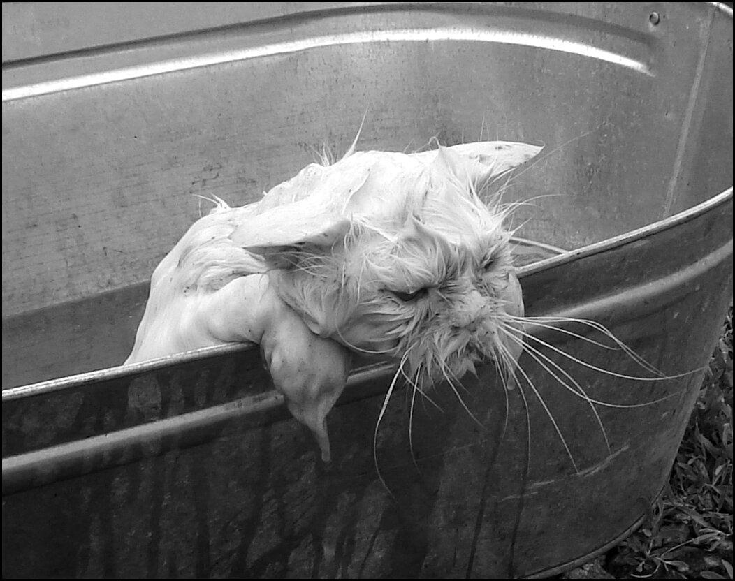 приступаем мокрая кошка демотиватор первое