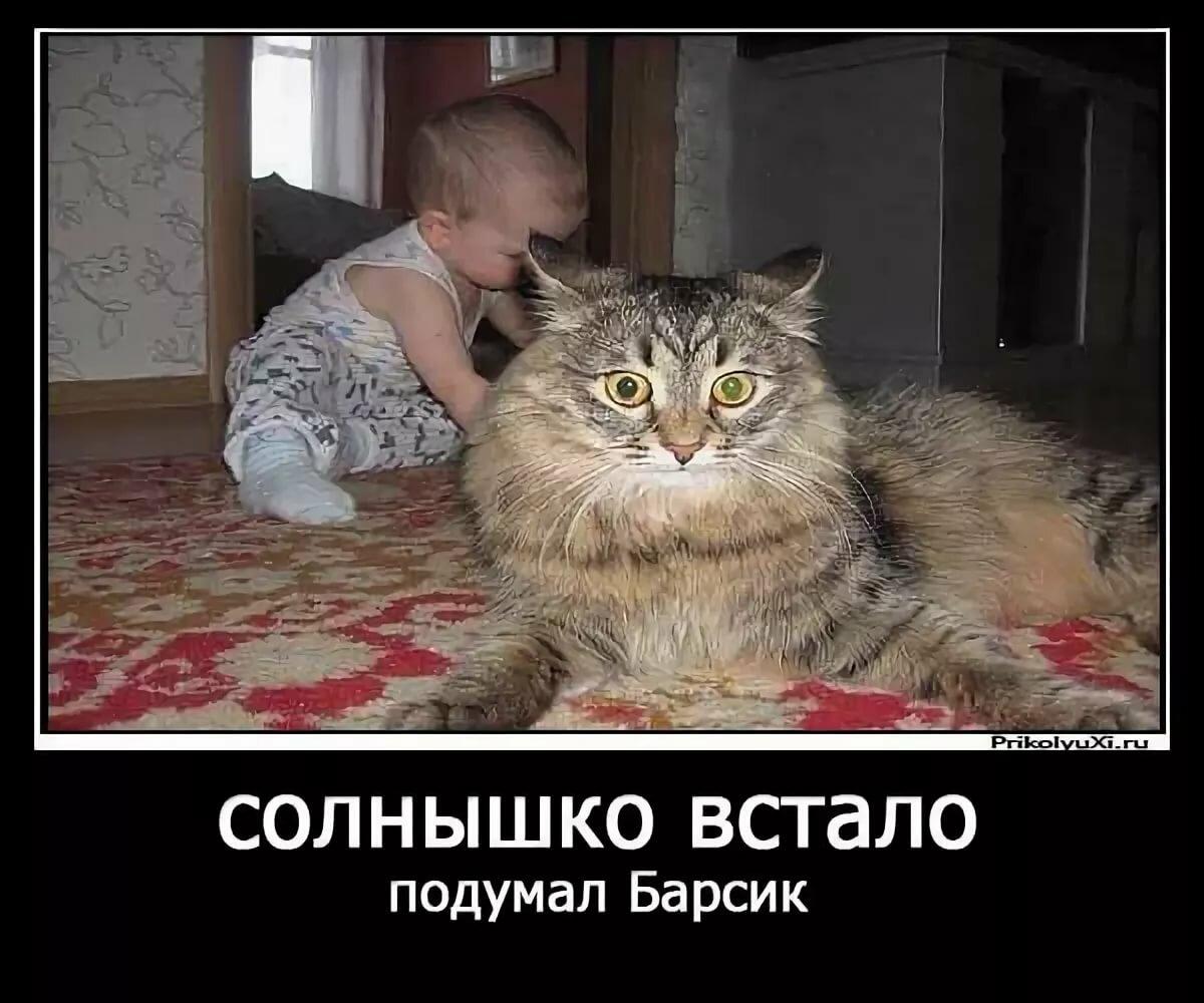 Демотиваторы котов фото