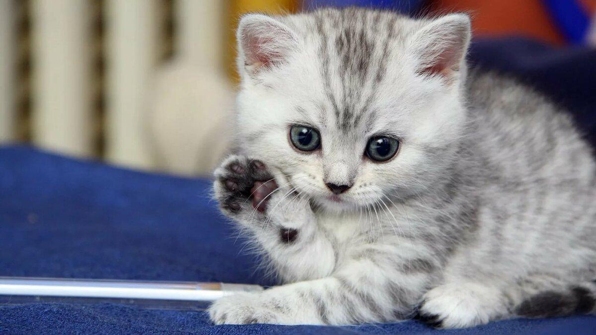 Смотреть смешных котят картинки