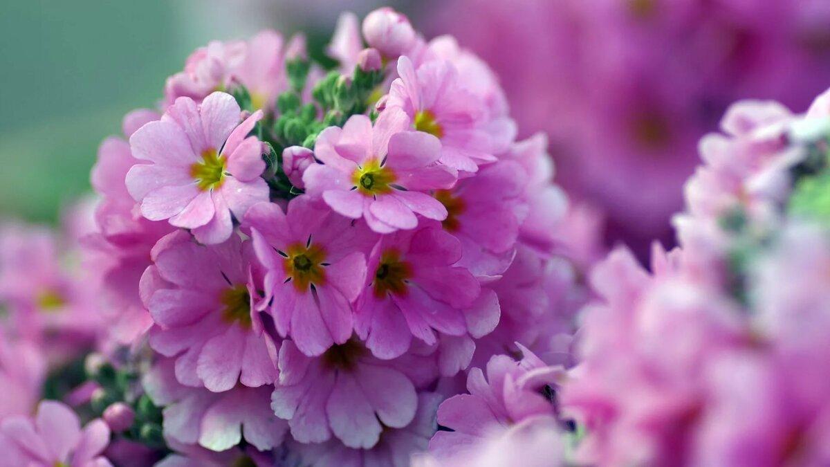 часа картинки цветочки в отличном качестве это тоже