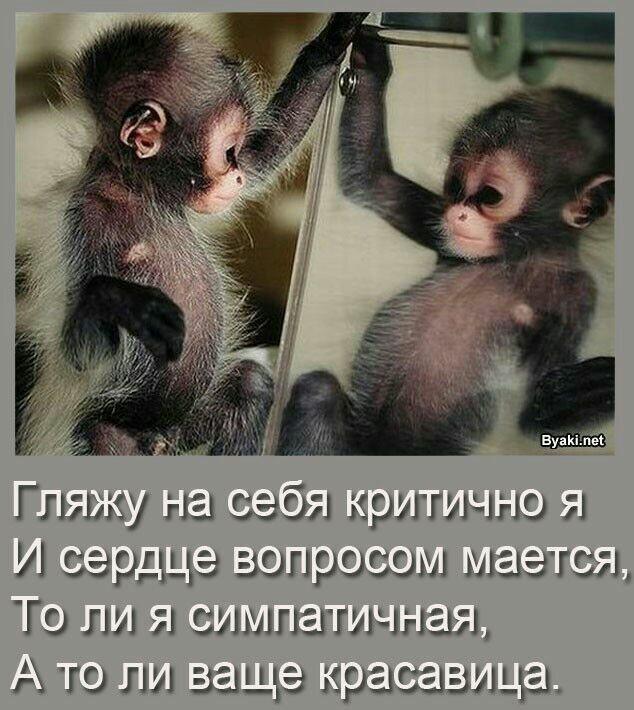 Прикольные картинки с обезьянками и надписями, тортиком день