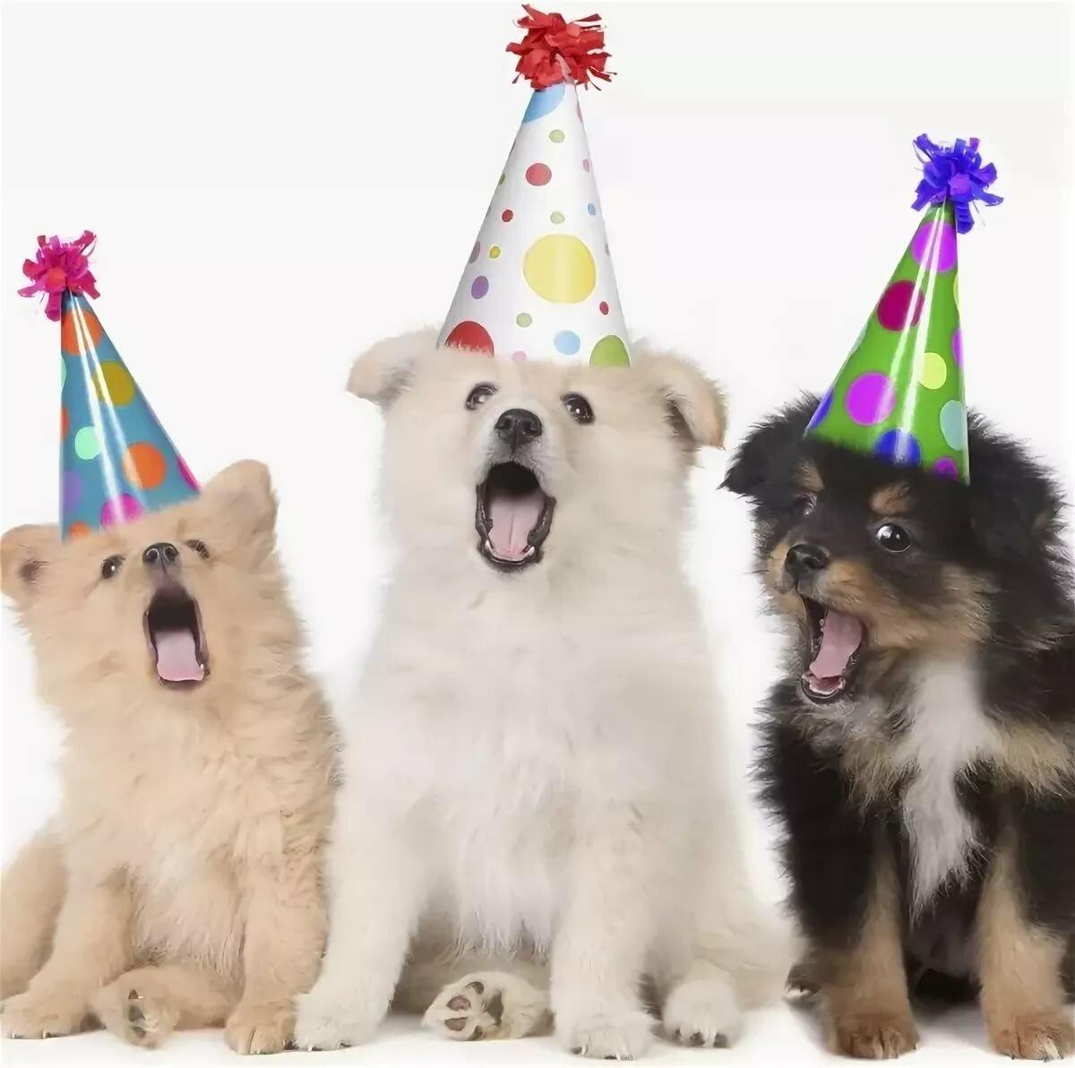 Новым годом, открытка с днем рождения с собачками и кошками