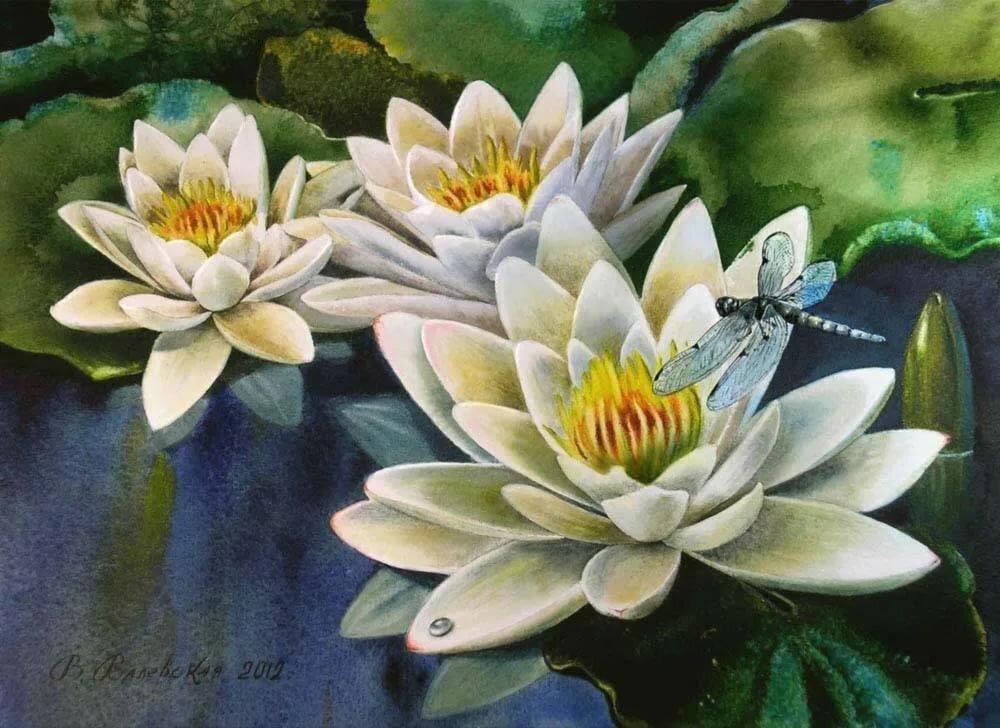Поведения, картинки со стрекозами на пруду с лилиями
