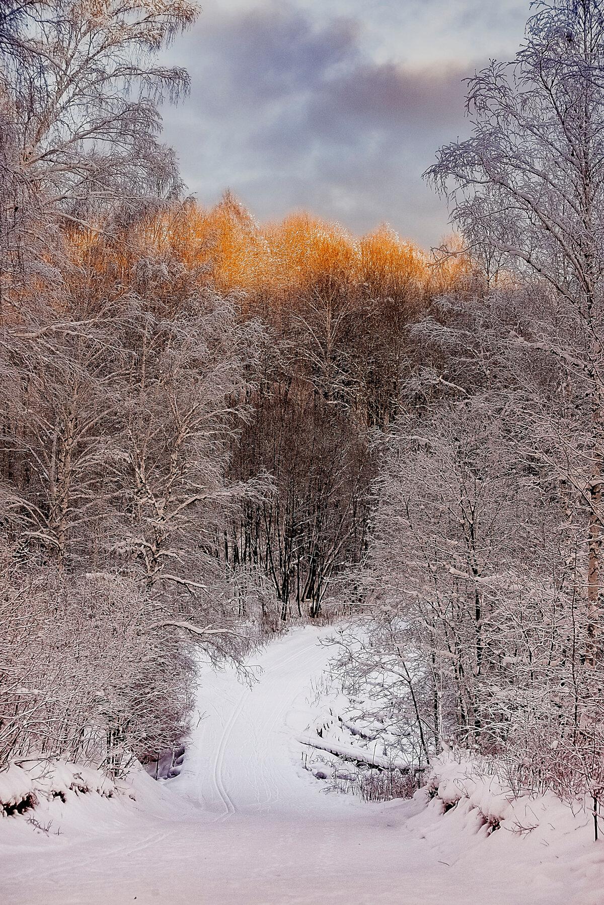 Прогулки в лесу.