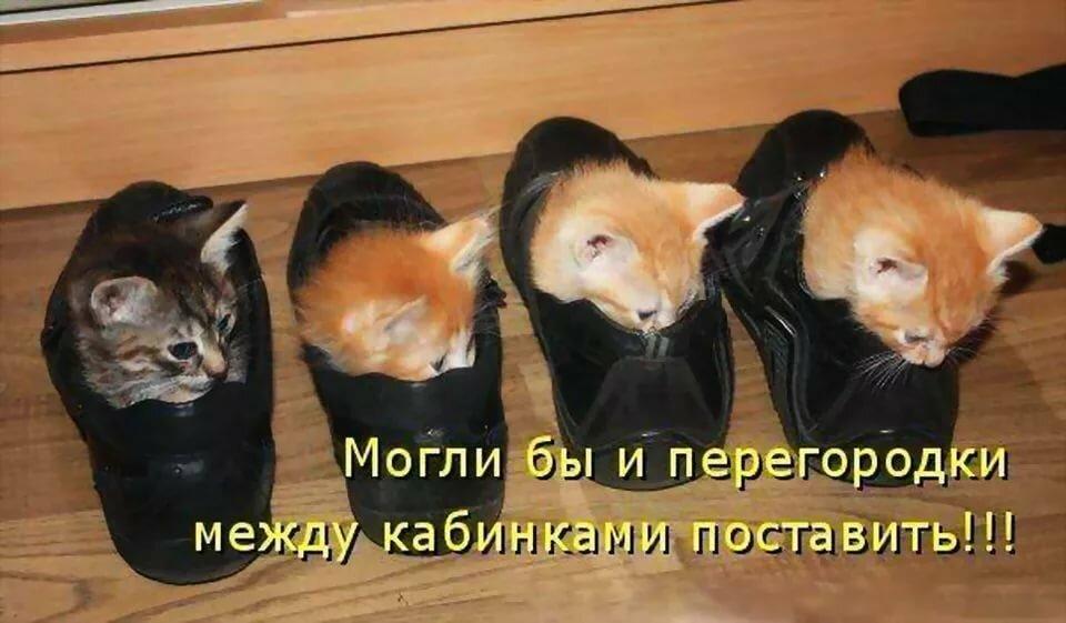 Картинки, очень смешные фотографии до слез с котами и надписями