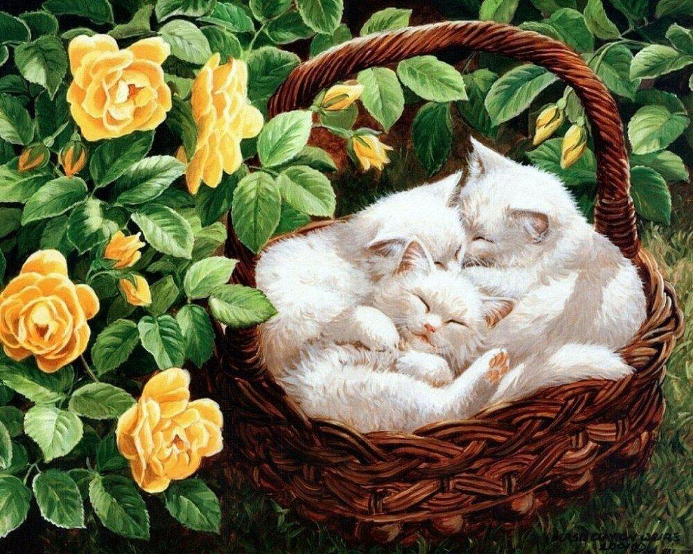 Картинки с кошками картинки с кошками, видом краснодара