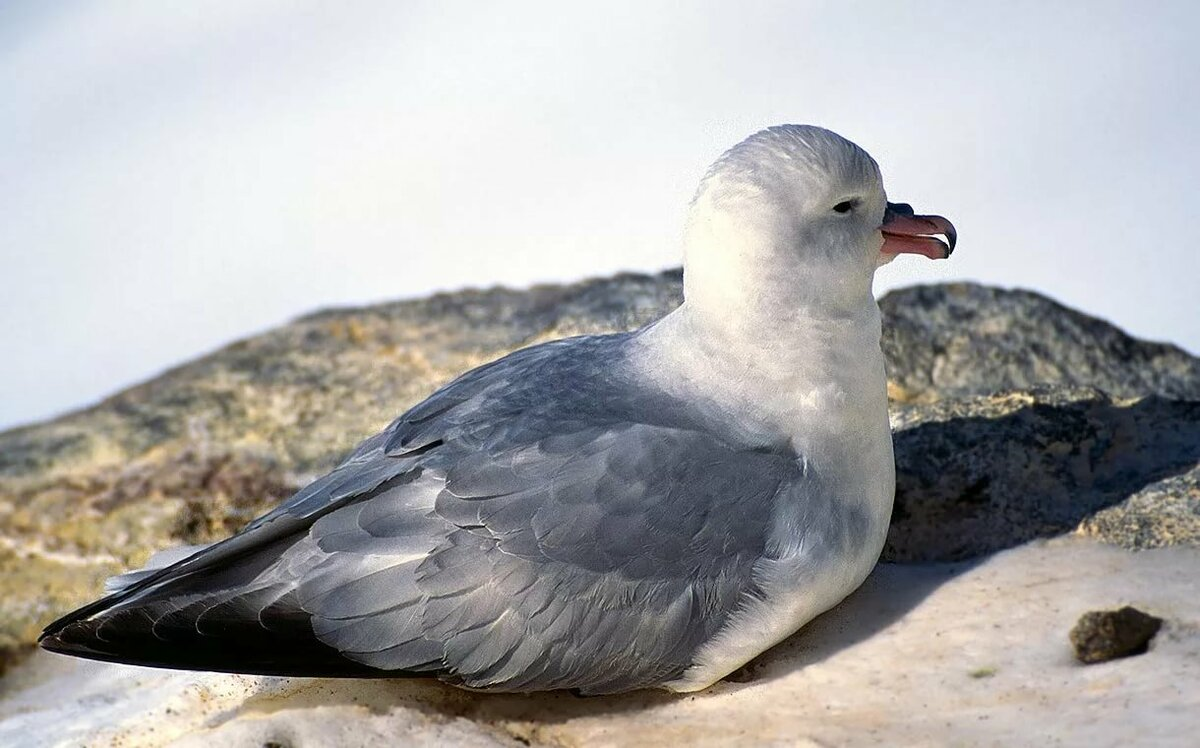 куклы напрокат птицы антарктиды с названиями теплообменника