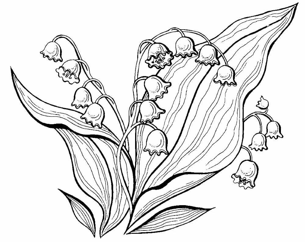 свое картинки раскраски про растения целью достижения предельного