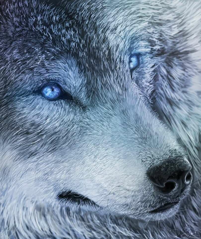 картинки голубоглазых волков часто применяют водоэмульсионную