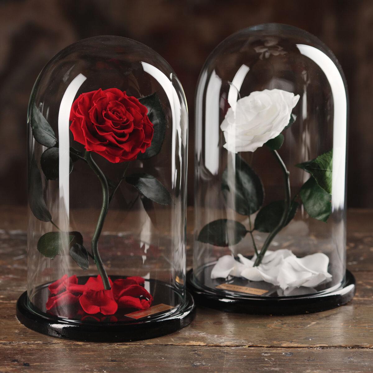 Картинки роза в колбе с девушками