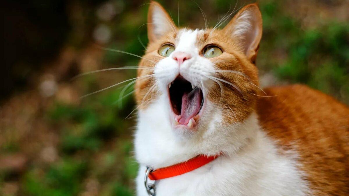 Самая, прикольная картинка на кошку